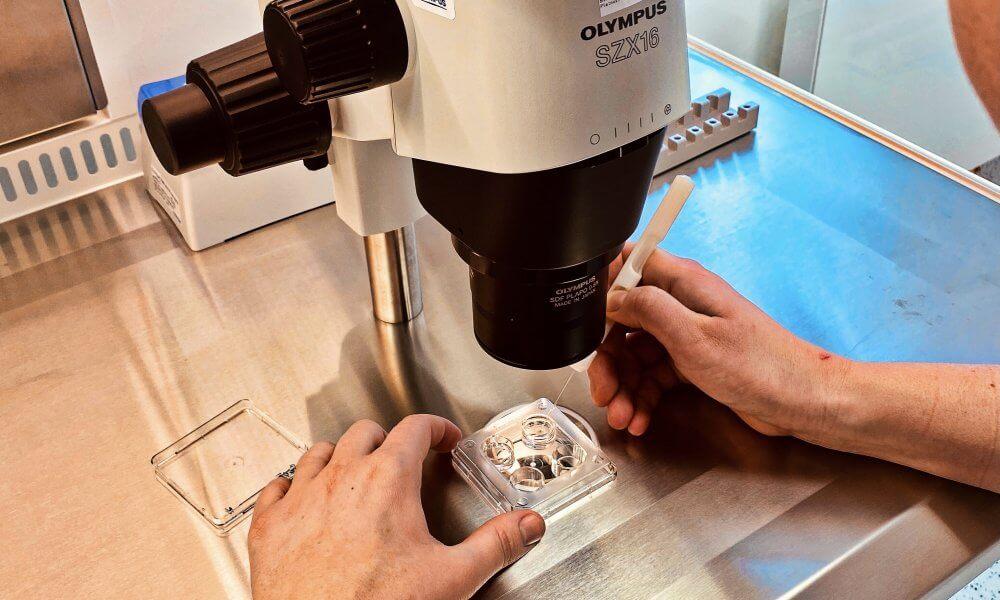 Do našeho kolektivu v Karlových Varech hledáme embryologa